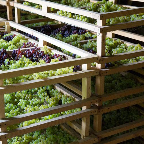 vins-jura-etoile-montbourgeau-jura-carre-domaine-3